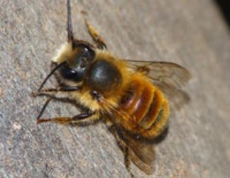 Bienenkiste
